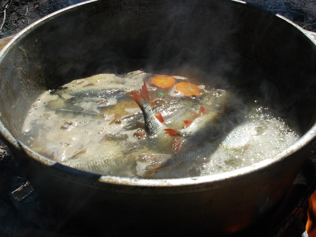 Уха или рыбный суп. Рецепты правильной ухи.