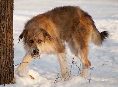 Бродячие собаки, стрелять ли?