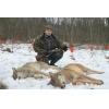 Отчет об охоте на волка фото