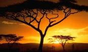 10 дней африканского сафари